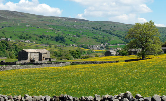 Hay Meadow in Swaledale