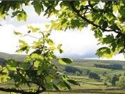 Nethergill View